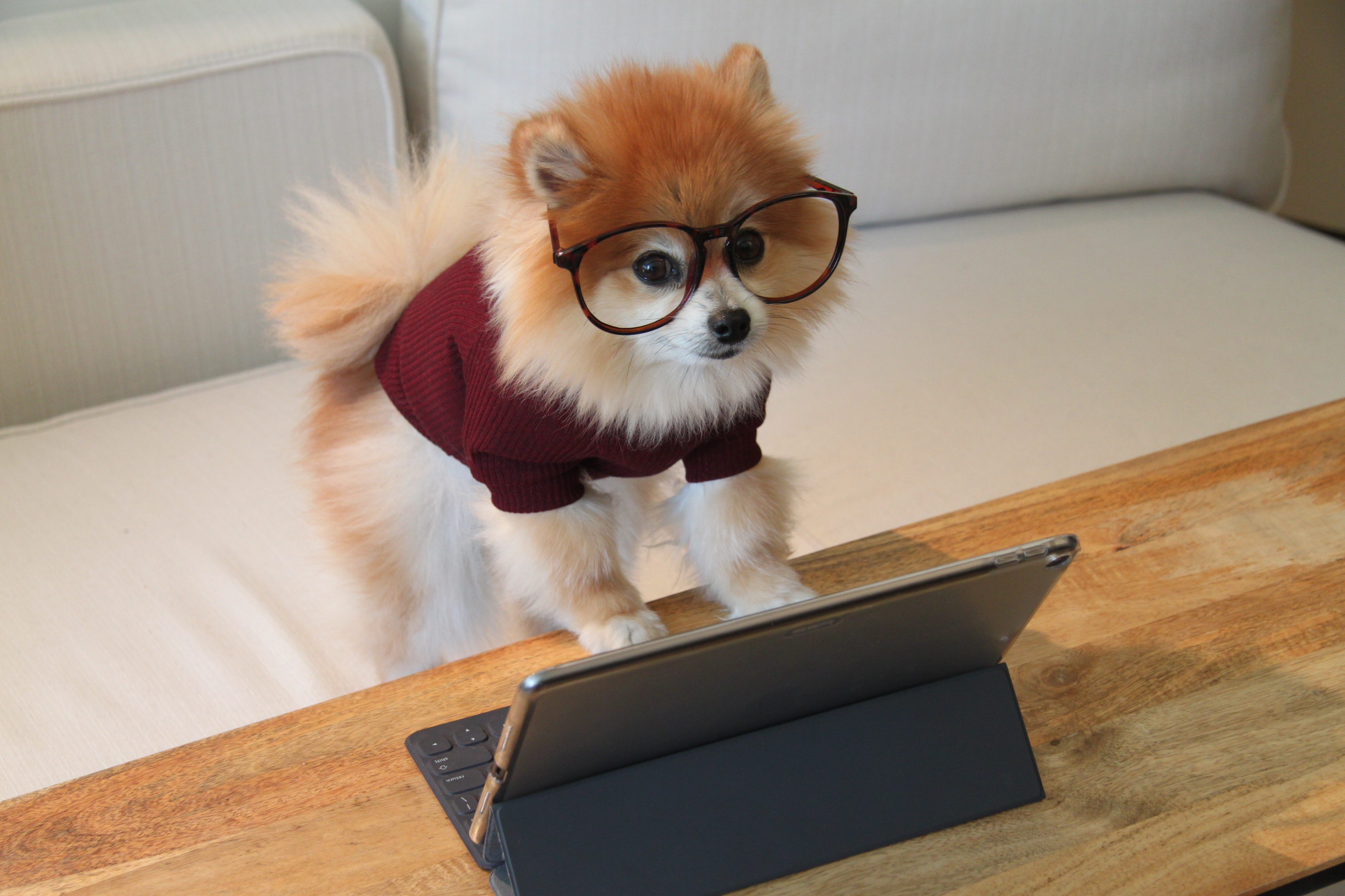 A cute dog in reading glasses in front of a computer