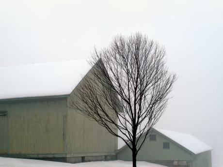 A photograph of two barns and a tree in a snowy field