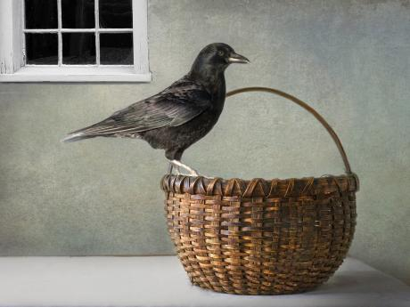 A photograph of a crow perched on a wicker basket. There is a window in the background